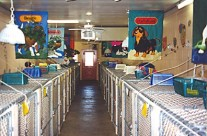Roomy indoor kennels