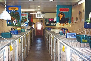 Our roomy, comfy air conditioned and heated kennels